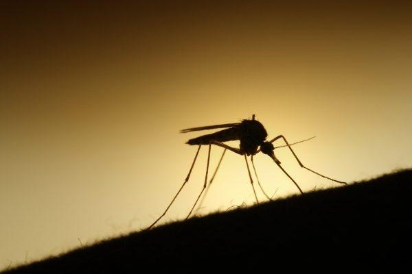 Cách đuổi muỗi trong nhà đơn giản bằng các phương pháp sau