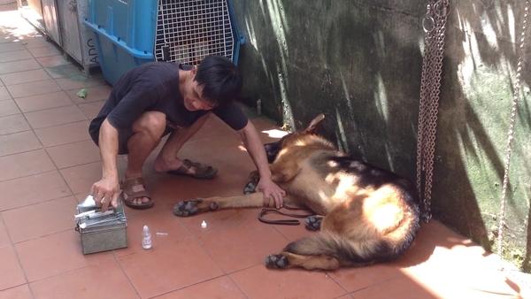 trị ve chó bằng long não