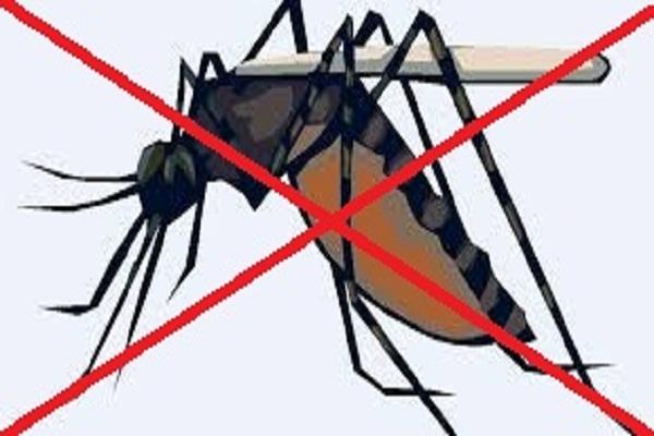 Cách diệt muỗi bằng phương pháp tự nhiên?