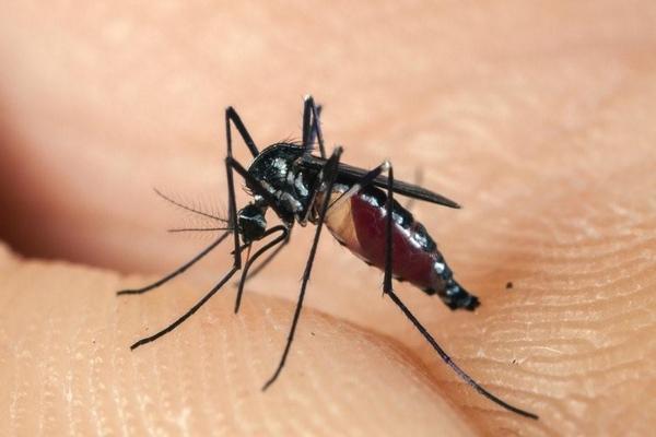 mua thuốc diệt muỗi sinh học