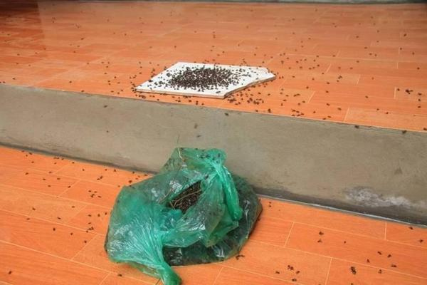 diệt các loại ruồi