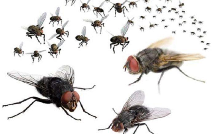 Cách diệt ruồi đơn giản nhưng không phải ai cũng biết