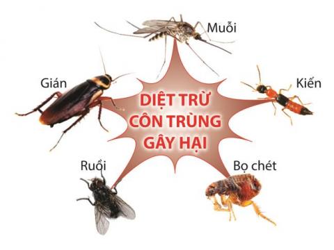Lưu ý khi sử dụng thuốc diệt côn trùng