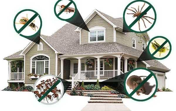 lưu ý khi sử dụng thuốc diệt côn trùng -2